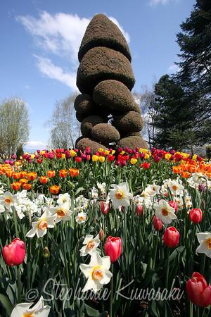 Tulips0411(edit)_0020