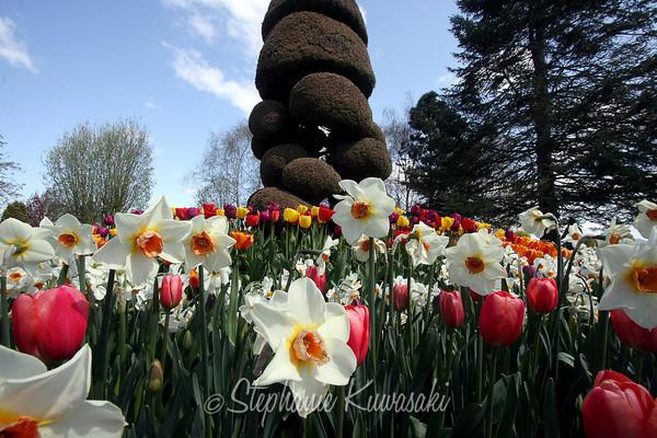 Tulips0411(edit)_0021