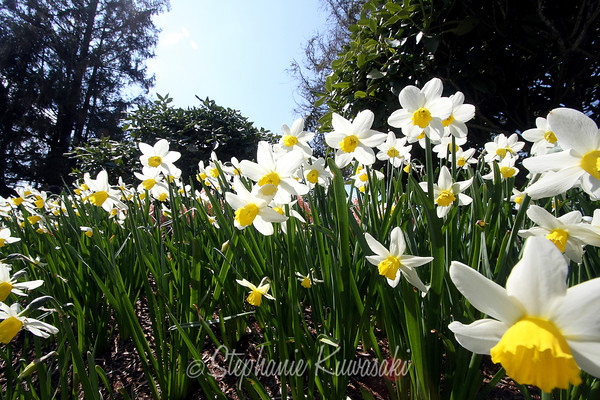 Tulips0411(edit)_0022