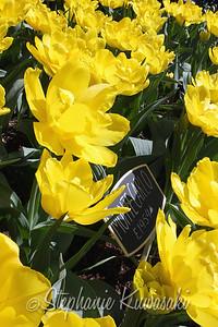 Tulips0412(edit)_0003