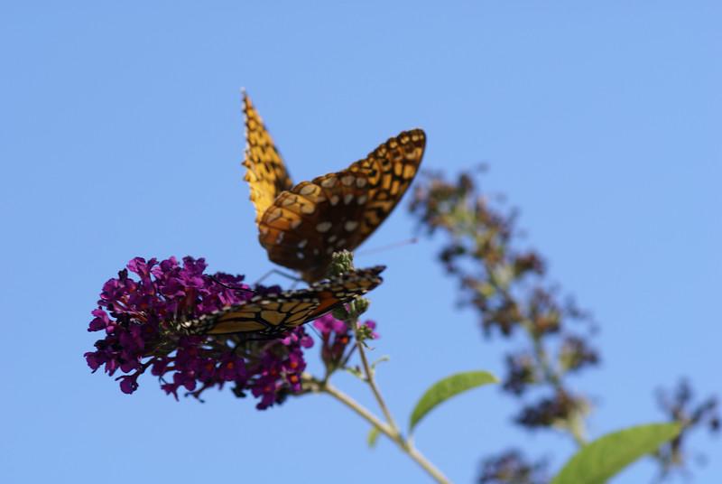 Butterflys in Boston