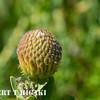 ucsc aboretum-5
