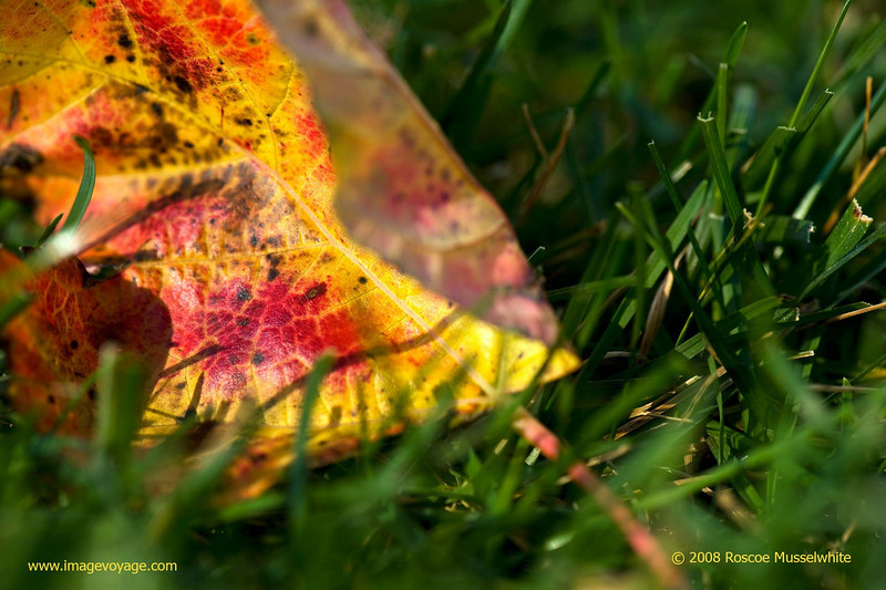 Leaf-and-Grass1008