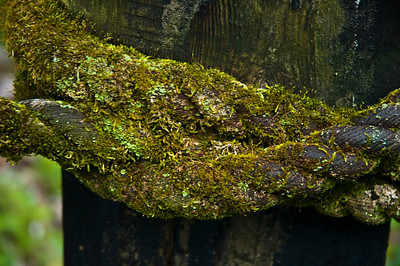 Moss growing on a rope on a post North Shore Oahu, Hawaii