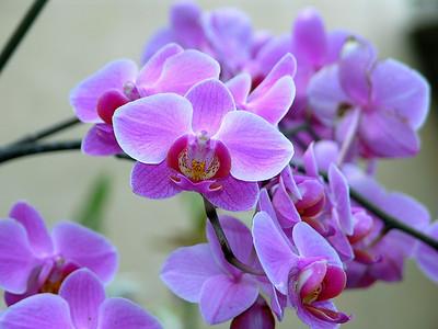 Orchids card dumps
