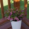 Deck Planters-07022015-090607(f)