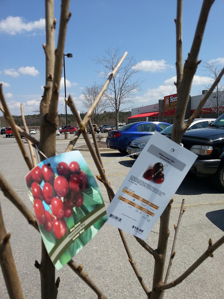 Cherries-04272013-133734.jpg
