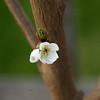 Cherry - Van-05062013-194649(f).jpg