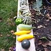 2014 Vegetable Gardens-10062014-170011.jpg