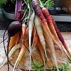 2014 Vegetable Garden-09152014-090900(f).jpg