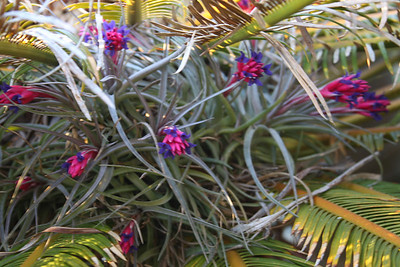 Flowers hidden under the cycad