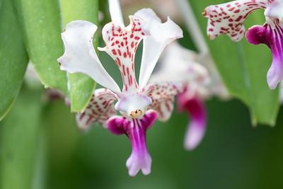 Virginia Flowers