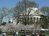 Cherry Blossoms & Jefferson Memorial in Washington DC - April 2005  - love to have your comments!