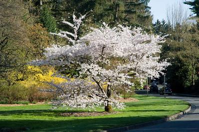 Washington Park Aboretum