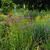 Wild garden, Wave Hill, 5-30-12