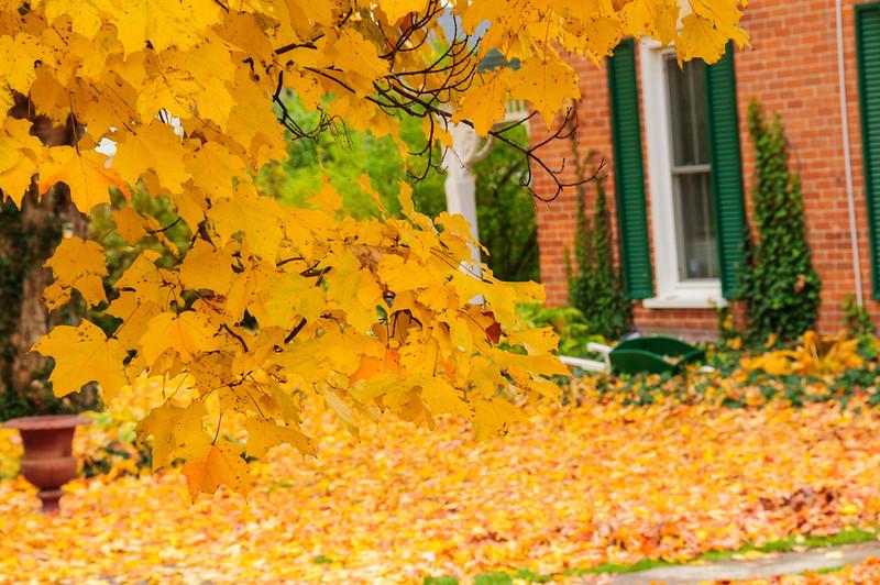 Fall colours-91