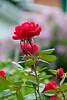 June Flowers-3