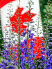 Canada Day flowers-1443