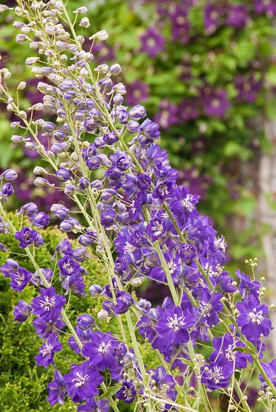 July flowers-9