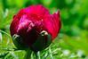 May 24 garden-54