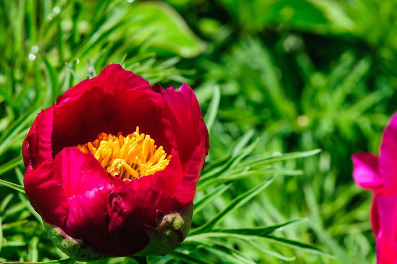 May 24 garden-49