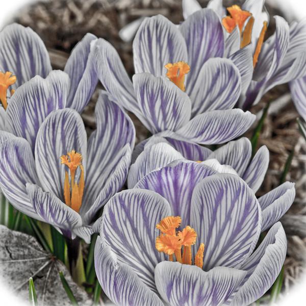 Flower macro-2