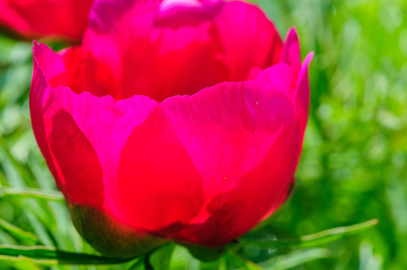 May 24 garden-55