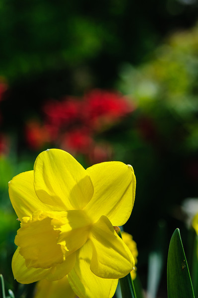 May 24 garden-47