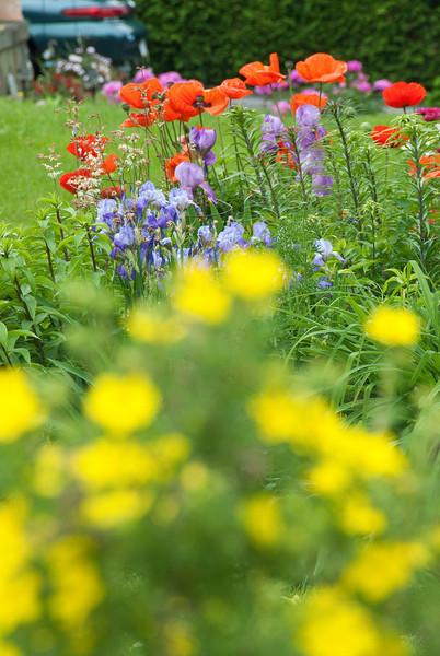 June flower-27