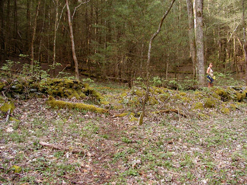 Old Stone Wall Covered in Moss<br /> Whiteoak Sink<br /> GSMNP April 3, 2007