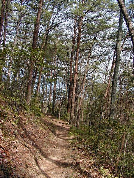 Ace Gap Trail  Pinewoods<br /> GSMNP April 25, 2007
