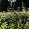 Wild Flower Etoy (28)