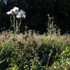 Wild Flower Etoy (27)