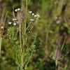 Wild Flower Etoy (3)