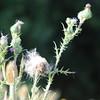 Wild Flower Etoy (13)