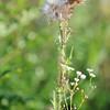 Wild Flower Etoy (24)