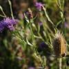 Wild Flower Etoy (37)