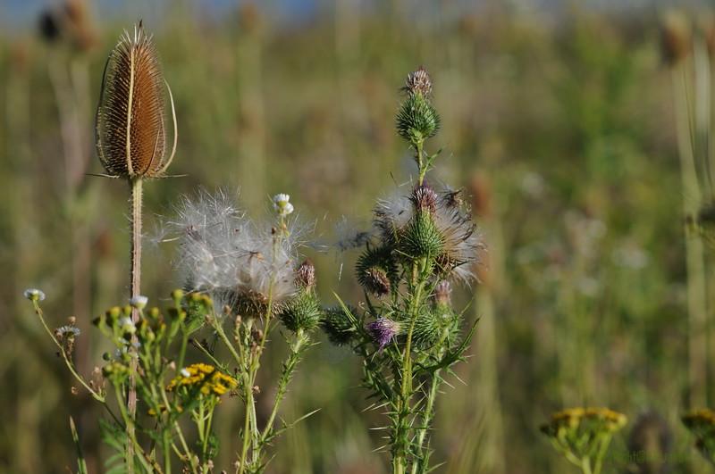 Wild Flower Etoy (2)