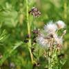 Wild Flower Etoy (8)