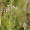 Wild Flower Etoy (5)