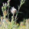 Wild Flower Etoy (19)