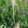 Wild Flower Etoy (20)