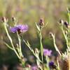 Wild Flower Etoy (36)