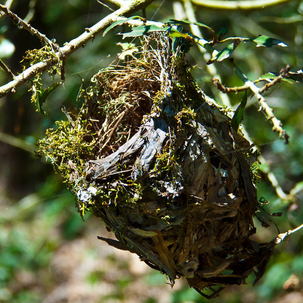 Small Delicate Birds Nest. Side View.