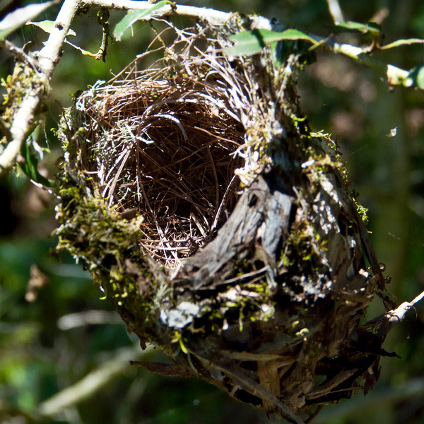 Small Delicate Birds Nest. Inside Focus.