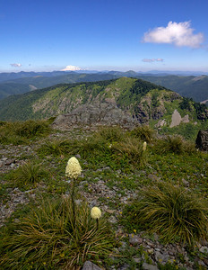 Bear Grass and Mt. Adams