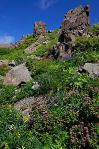 Wild Rock Garden
