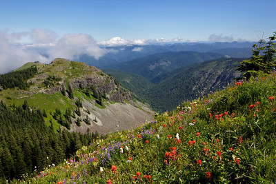 Flowered slopes and Mt. Saint Helens