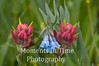 Pink paintbrush with bluebells
