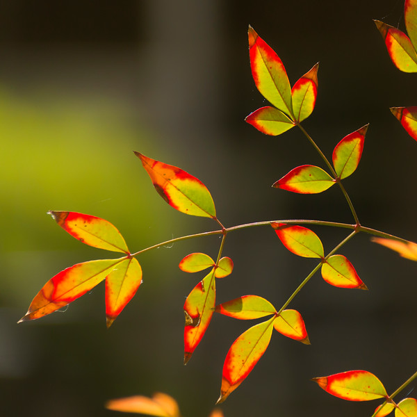 Leaves with color